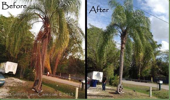 PamTree Trimming Bonita Springs