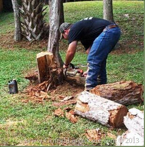 Tree Removal Bonita Springs