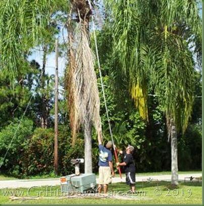 Tree Trimming Bonita Springs